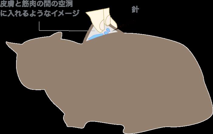 猫の点滴の液を入れる場所ー皮膚と筋肉の間の空洞に入れるイメージ
